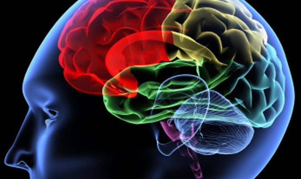 Έλληνες επιστήμονες συνέβαλαν στην δημιουργία μίνι-ανθρώπινων εγκεφάλων!