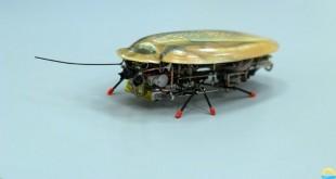Ένα νέο ρομπότ-κατσαρίδα που τρυπώνει παντού!