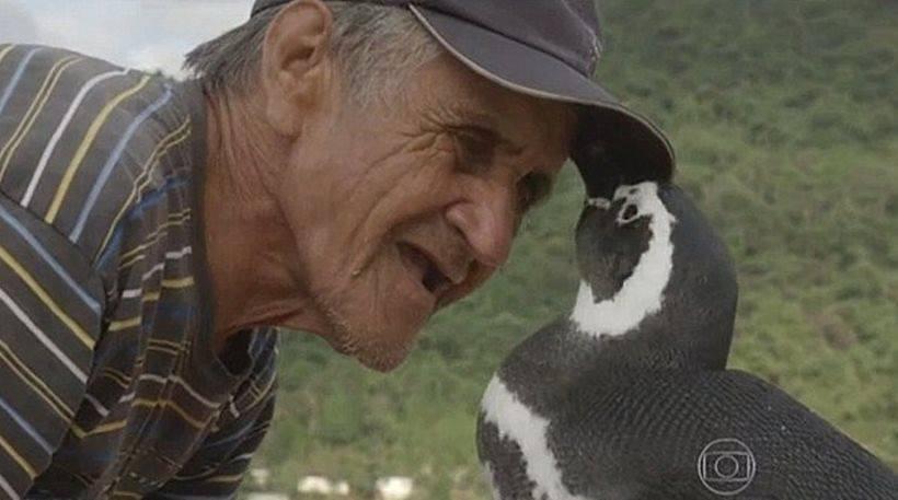 Απίστευτη ιστορία αγάπης: Πιγκουίνος ταξιδεύει κάθε χρόνο 5.000 χλμ για να δει τον άνθρωπο που τον έσωσε