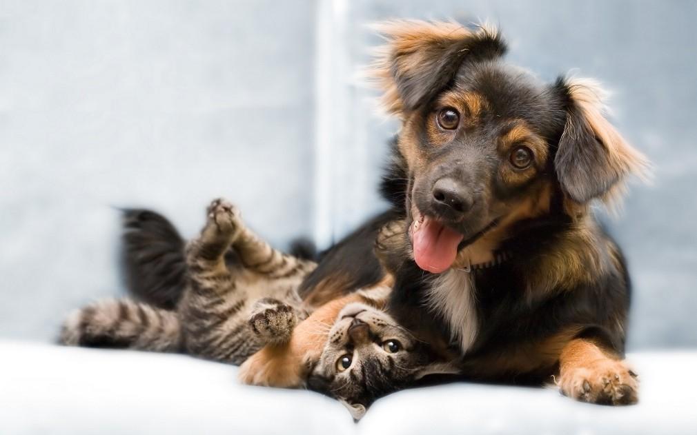 Σκυλιά στο μπαλκόνι, τέλος – Τι υπαγορεύει ο νέος νόμος για τα κατοικίδια