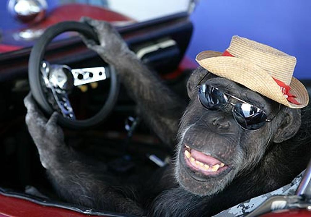 Μαϊμού οδηγεί ρομποτικό αναπηρικό καροτσάκι μόνο με τη σκέψη!