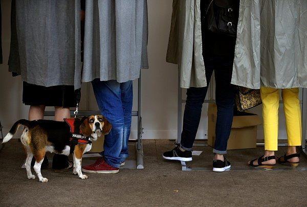 Ο σκύλος παρατηρεί με απορία τη διαδικασία