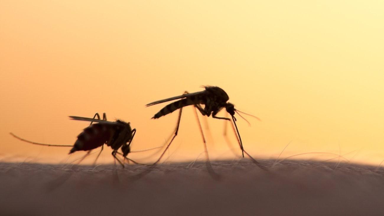 Αποτέλεσμα εικόνας για Διασωληνωμένος νεαρός μετά από… τσίμπημα κουνουπιού- Με βαριάς μορφής μηνιγγίτιδα στην Εντατική