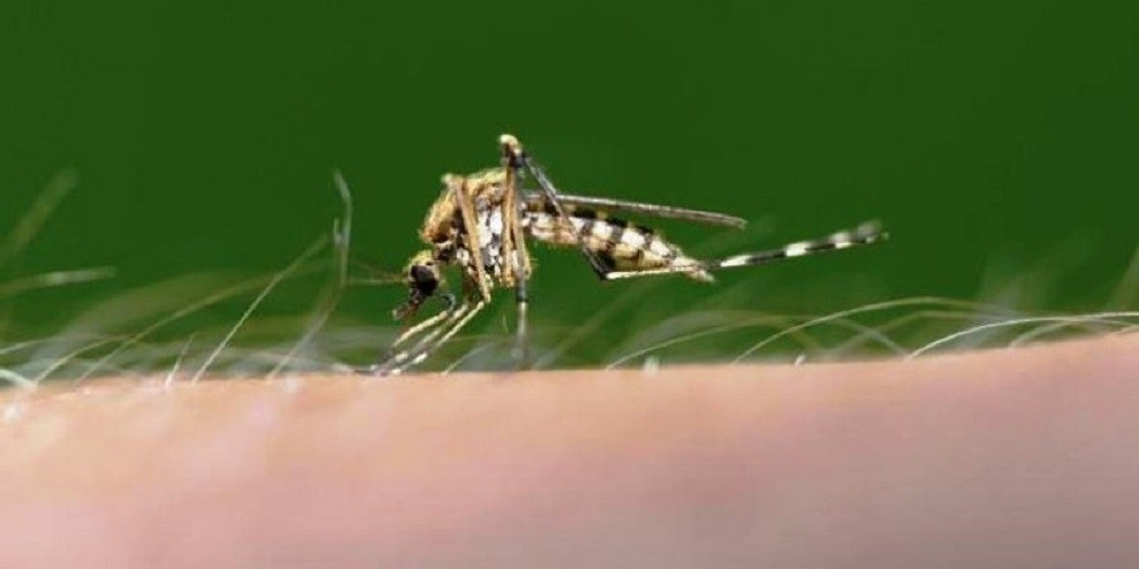 Θέλετε να απαλλαγείτε από τα κουνούπια; Έτσι θα τα καταφέρετε