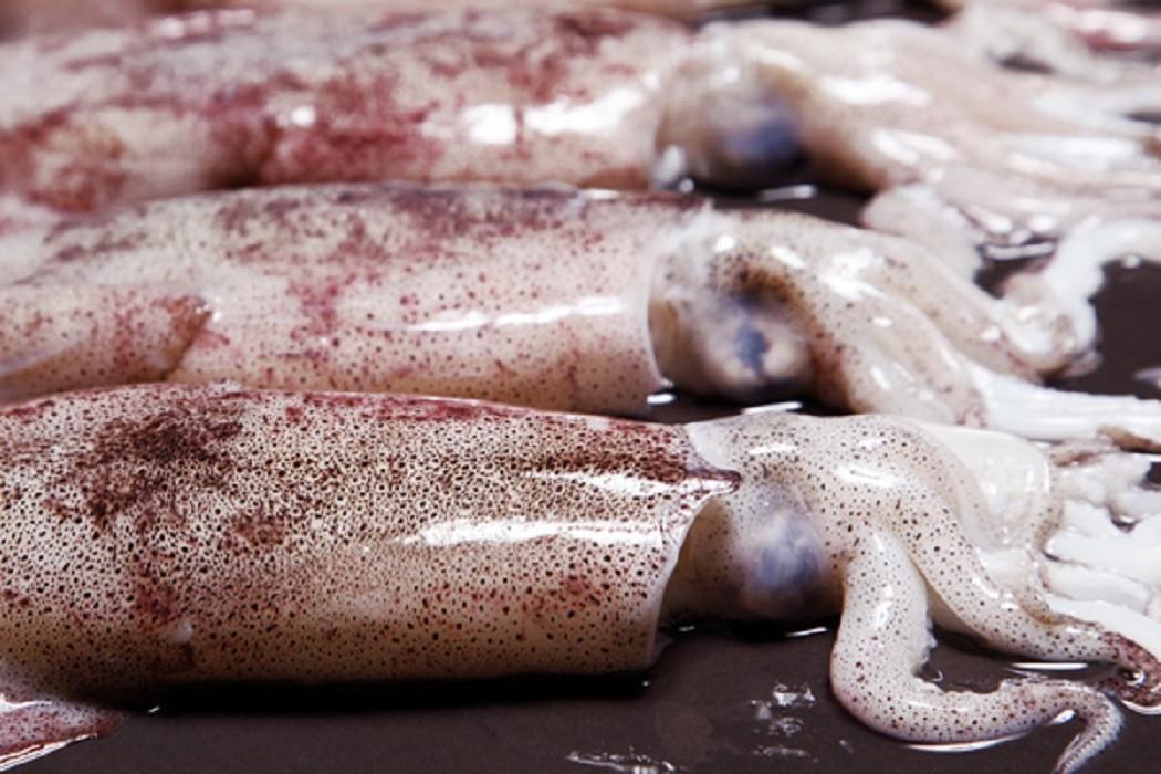 селекционная кальмары замороженные картинки киркланд