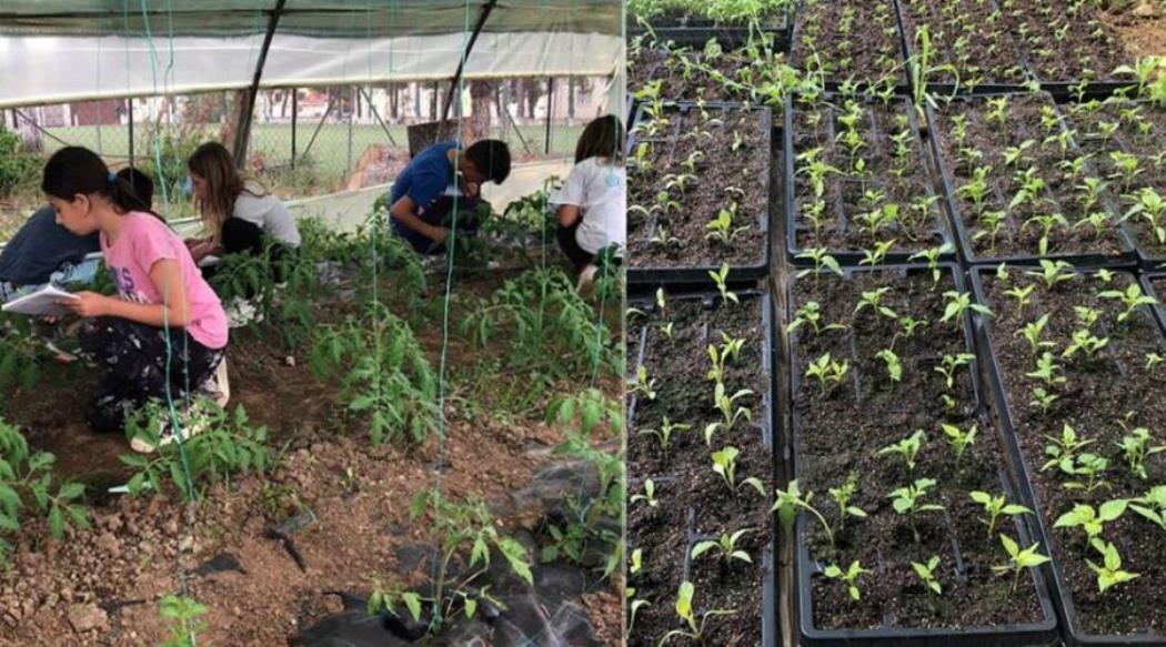 Αποτέλεσμα εικόνας για Απίστευτο: Κλείνει ο λαχανόκηπος που έφτιαξαν μαθητές Δημοτικού σχολείου εξαιτίας της εφορίας - Επιβλήθηκε τέλος επιτηδεύματος 800 ευρώ